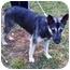 Photo 1 - German Shepherd Dog/Husky Mix Dog for adoption in Marion, North Carolina - Spirit