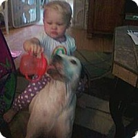Adopt A Pet :: Sidney CP - Dayton, OH