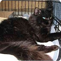 Adopt A Pet :: Mister - Westfield, MA