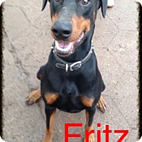 Adopt A Pet :: Fritz - Wichita, KS