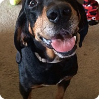 Adopt A Pet :: Travis - North Olmsted, OH