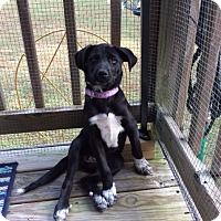 Adopt A Pet :: Leia - Richmond, VA
