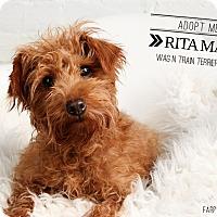 Adopt A Pet :: Rita Mae-Pending Adoption - Omaha, NE