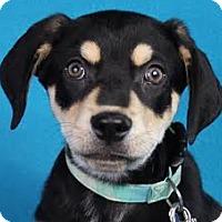 Adopt A Pet :: Zander - Minneapolis, MN