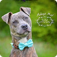 Adopt A Pet :: Rocky - Fort Valley, GA