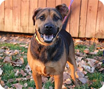 Shepherd (Unknown Type) Mix Dog for adoption in Elyria, Ohio - Cody-Prison Graduate