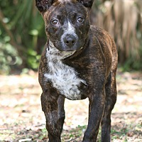 Mixed Breed (Medium) Mix Dog for adoption in Jacksonville, Florida - Evie