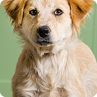 Adopt A Pet :: Fawn - Owensboro, KY