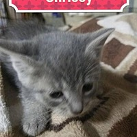 Adopt A Pet :: Chrissy - Rochester, NY