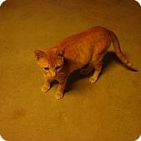 Adopt A Pet :: Red - Bridgeton, MO