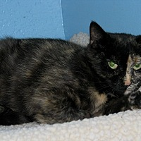 Adopt A Pet :: Jaycie - New Kensington, PA