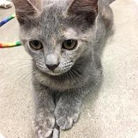 Adopt A Pet :: Bellini - Encinitas, CA