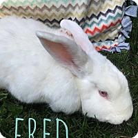 Adopt A Pet :: Fred - Elizabethtown, KY