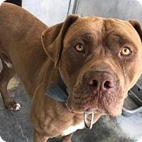 Adopt A Pet :: Leonard Meyer - Seattle, WA