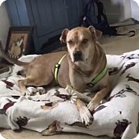 Adopt A Pet :: Brody - Sebring, FL