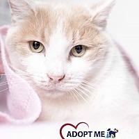 Adopt A Pet :: Tofu - Alexandria, VA