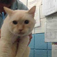 Adopt A Pet :: MIDNIGHT - Albuquerque, NM