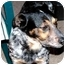 Photo 3 - Australian Cattle Dog Mix Dog for adoption in Lamar, Nebraska - Tripod