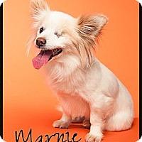 Adopt A Pet :: Marnie - Escondido, CA