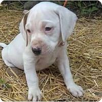 Adopt A Pet :: Duke - Clayton, OH