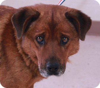 Retriever (Unknown Type) Mix Dog for adoption in McDonough, Georgia - Terra