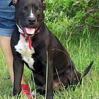 Adopt A Pet :: Simba - Corpus Christi, TX