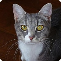 Adopt A Pet :: .Skye - Ellicott City, MD