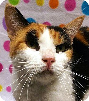 Calico Cat for adoption in Watauga, Texas - Po