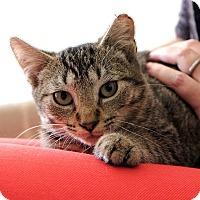 Adopt A Pet :: Molly Dean - Brooklyn, NY