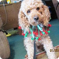 Adopt A Pet :: Joey - Clayton, OH