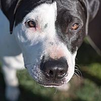 Adopt A Pet :: Rally - Lincoln, CA