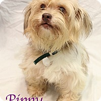Adopt A Pet :: Pippy - Bradenton, FL