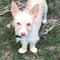 Adopt A Pet :: A - MICKEY - Ann Arbor, MI