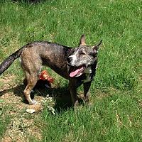 Adopt A Pet :: Pawlina - Rowlett, TX