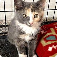 Adopt A Pet :: Cassia - River Edge, NJ