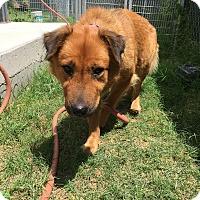Adopt A Pet :: Felicity - Kirby, TX