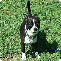 Adopt A Pet :: BUSTER - Wilmington, NC
