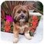 Photo 2 - Havanese Mix Dog for adoption in Los Angeles, California - SCARLETT ROSE