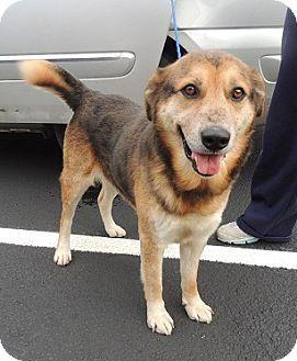 Shepherd (Unknown Type)/Catahoula Leopard Dog Mix Dog for adoption in Birmingham, Alabama - Buddy