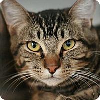 Adopt A Pet :: Leo - Canoga Park, CA