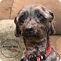 Adopt A Pet :: Gus~ADOPTED - Troy, OH
