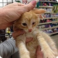 Adopt A Pet :: Blake - Fort Lauderdale, FL