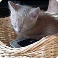 Adopt A Pet :: Bacon - Davis, CA