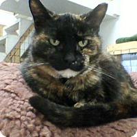 Adopt A Pet :: Shelly - Delmont, PA
