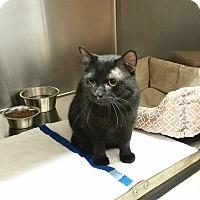 Adopt A Pet :: Garfunkel - Cincinnati, OH