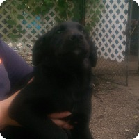 Adopt A Pet :: Fiona - Antioch, IL