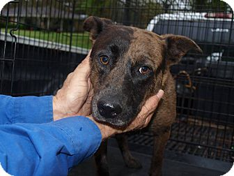 Terrier (Unknown Type, Medium) Mix Dog for adoption in Oakdale, Louisiana - Rayne