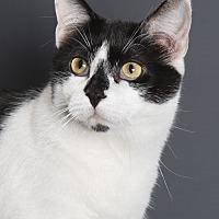 Adopt A Pet :: Bentley - Nashville, TN