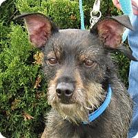 Adopt A Pet :: A078365 Leonard - Overland Park, KS