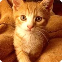 Adopt A Pet :: Tygra - Trenton, NJ